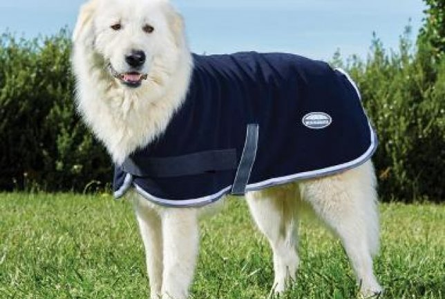 Winter dog coats in store now